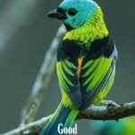 Good morning images with colorful birds