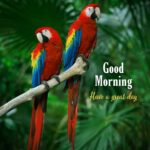 Good morning images with parrot