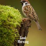beautiful bird image good morning