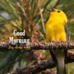 good morning bird pic