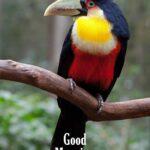 good morning birds