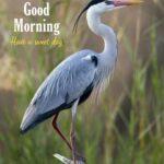 good morning birds images download