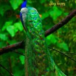 good morning birds images stay happy