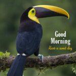good morning birds photo