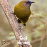good morning image with bird for mobile