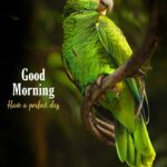good morning image with birds have a perfect day