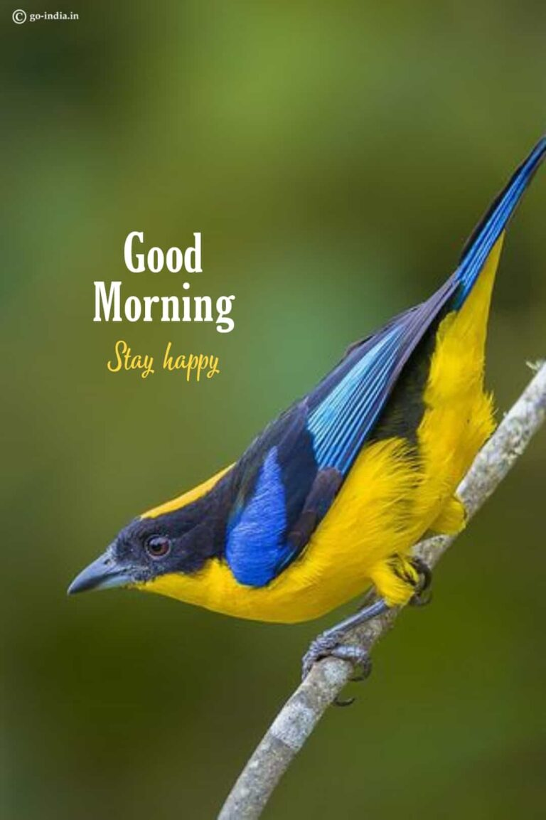 good morning images birds