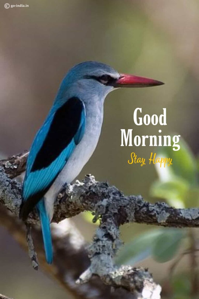 good morning images birds hd