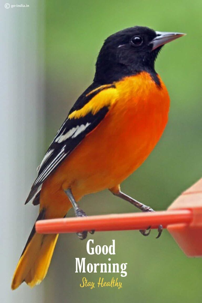 good morning images with birds stay healthy