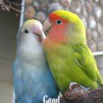 good morning love bird image