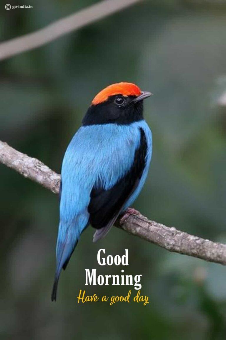 good morning pic birds