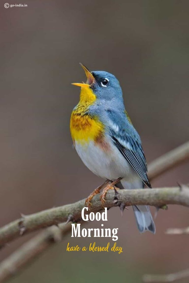 good morning to you the birds are chirping