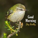 good morning wallpaper with bird