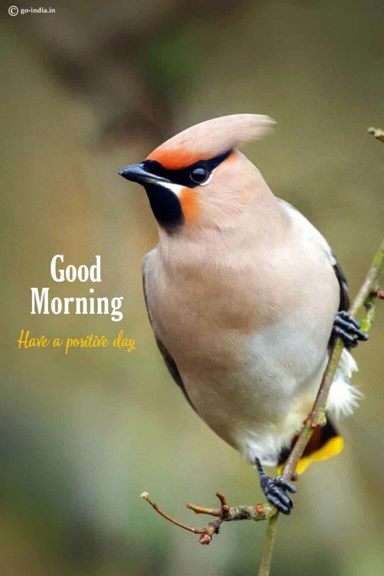 good morning wallpaper with birds