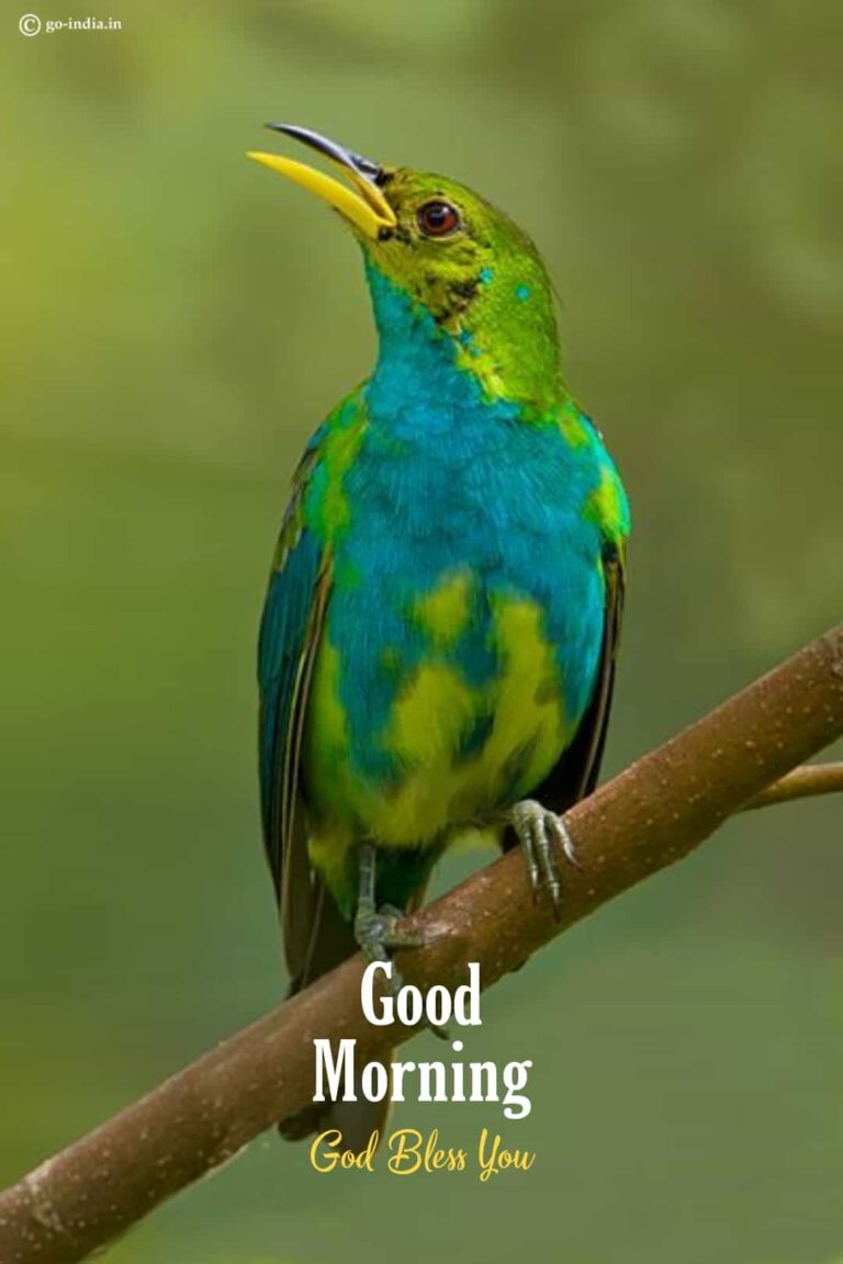 good morning wishes birds images