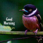 good morning with bird