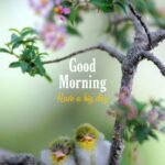 love birds good morning images have a big day