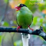 stay always happy good morning bird image
