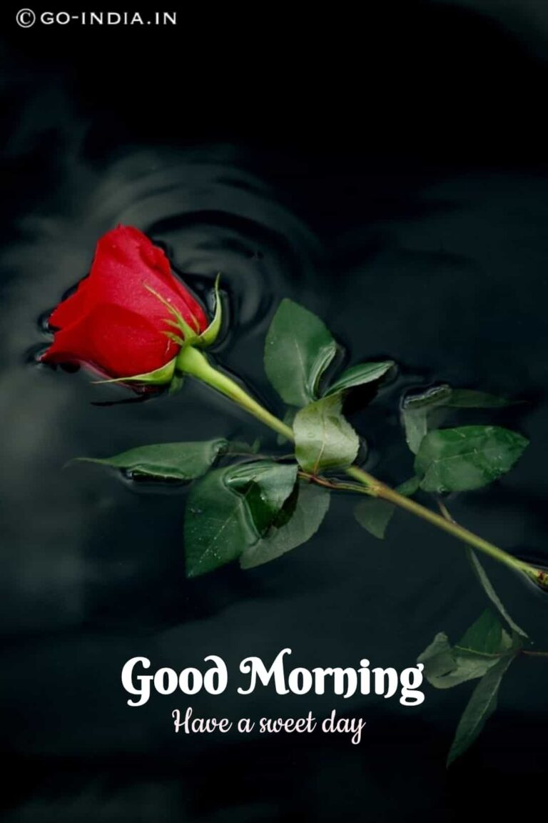cute and romantic red rose image with good morning