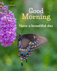 good morning butterfly wallpaper