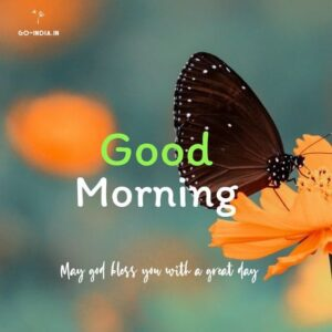 good morning butterfly wallpapers