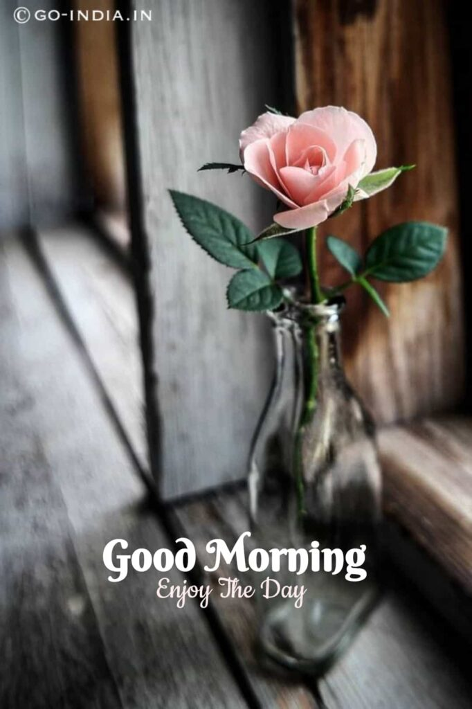 good morning enjoy the day with pink rose images