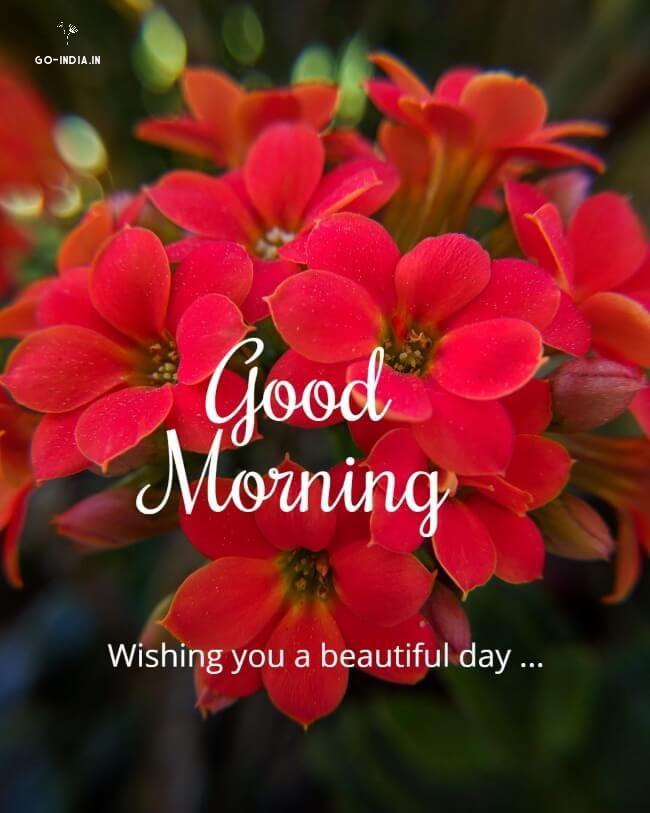 good morning flowers wallpaper download