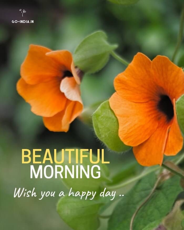 good morning flowers wallpaper for whatsapp