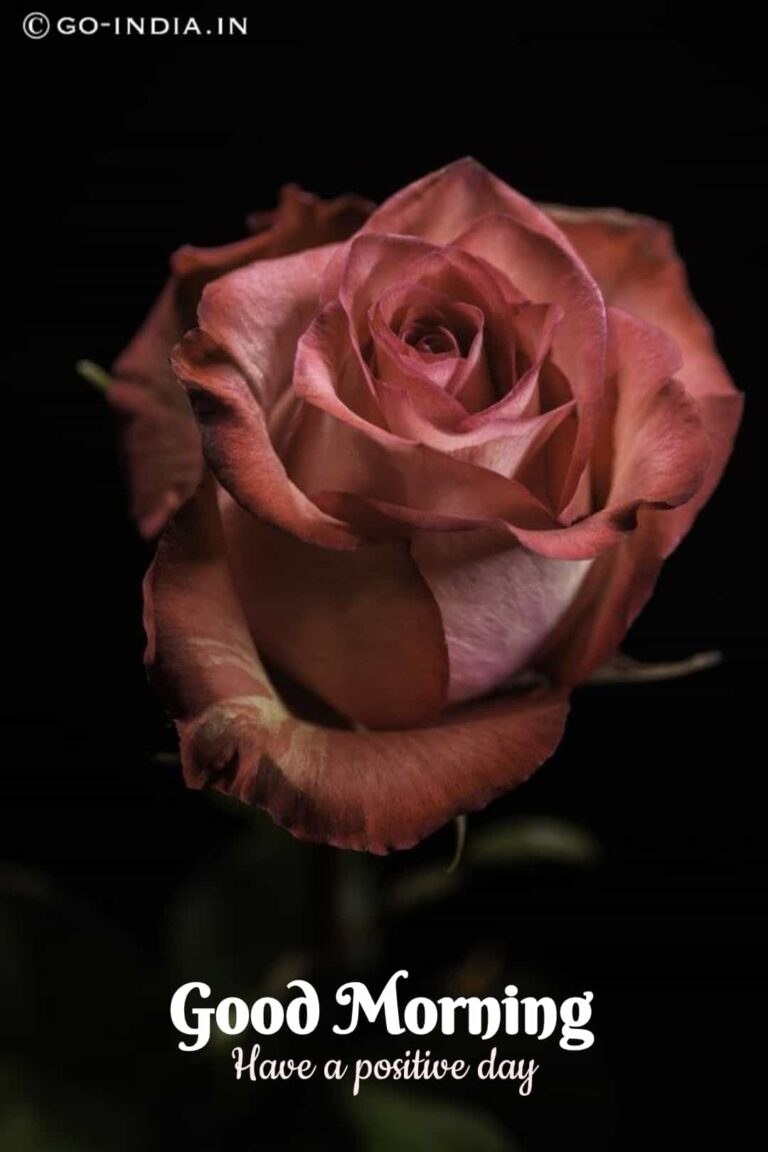 good morning have a positive day images with pink rose