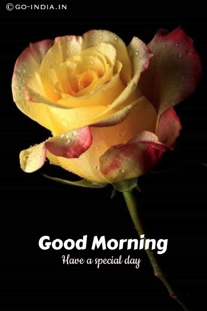 good morning have a special day with yellow rose images