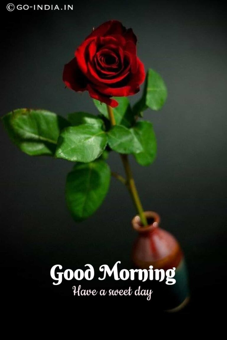 good morning have a sweet day image with red rose