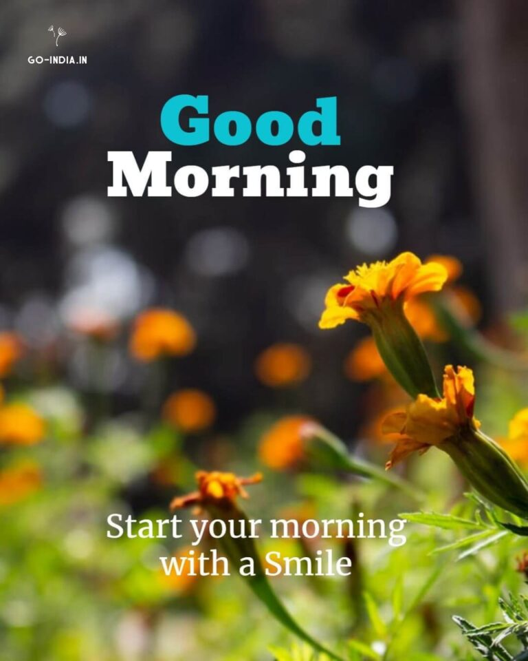 good morning hd flowers images