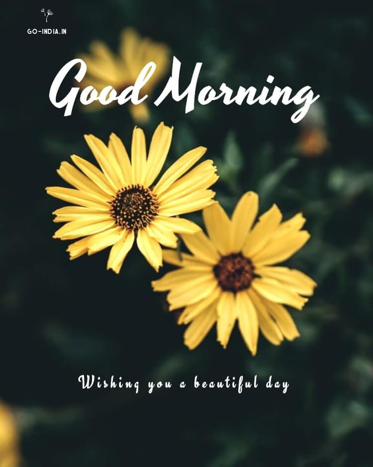 good morning hd flowers pic