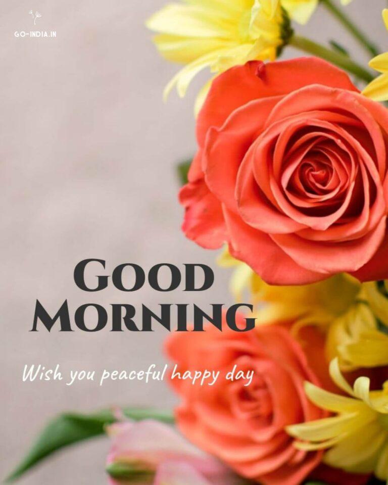 good morning hd rose images
