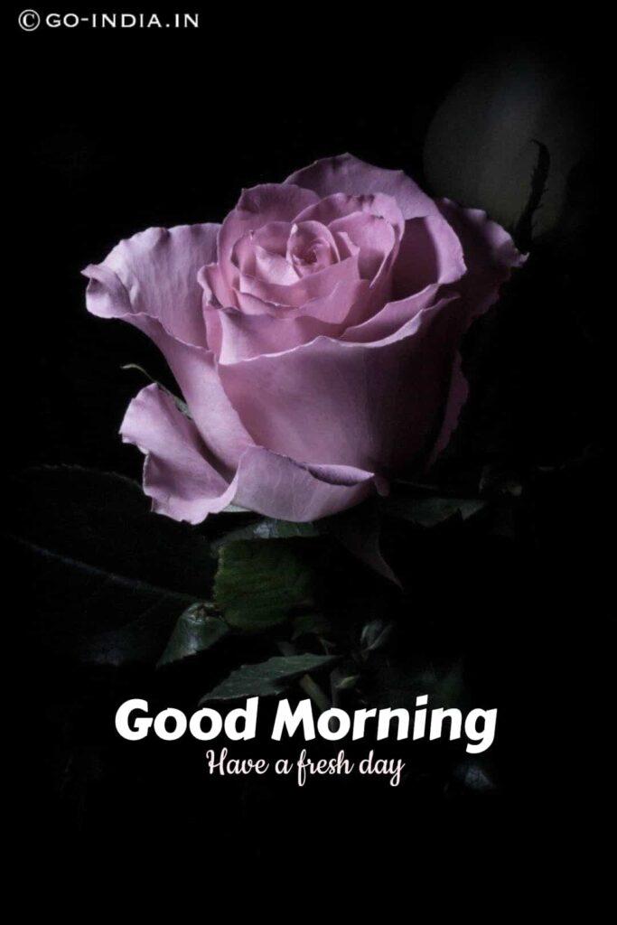 good morning images rose