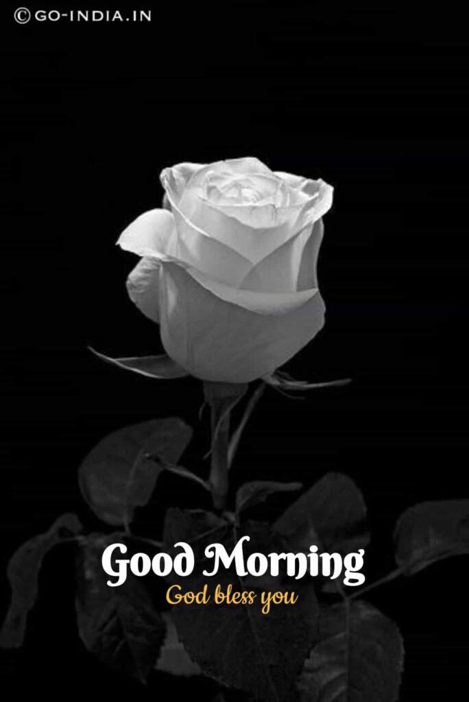 good morning images with black and white rose images