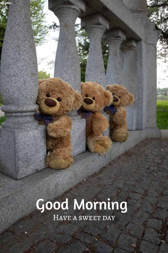 good morning images with three teddy bear