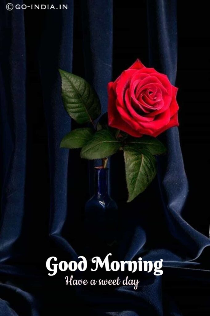 good morning photos with red rose