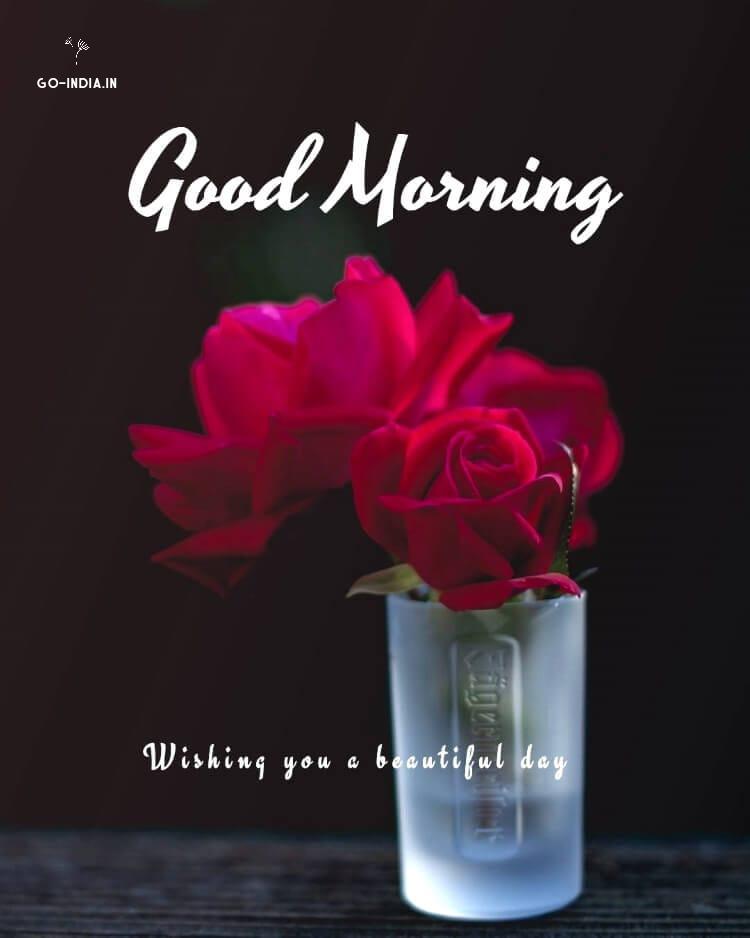 good morning red rose wallpaper
