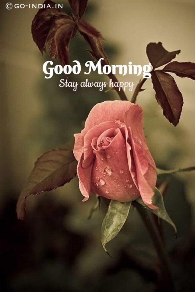 good morning stay always happy image with orange rose