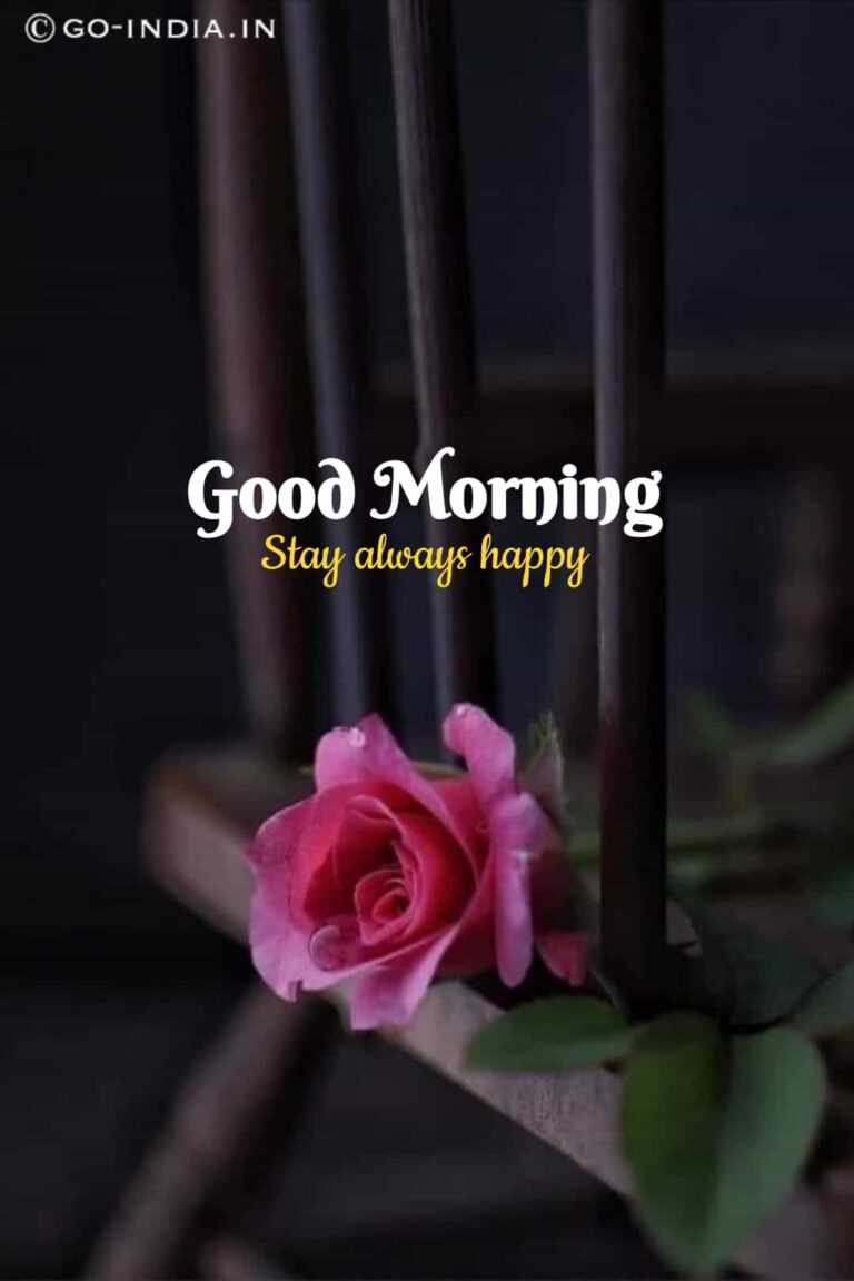 good morning stay always happy image with pink rose