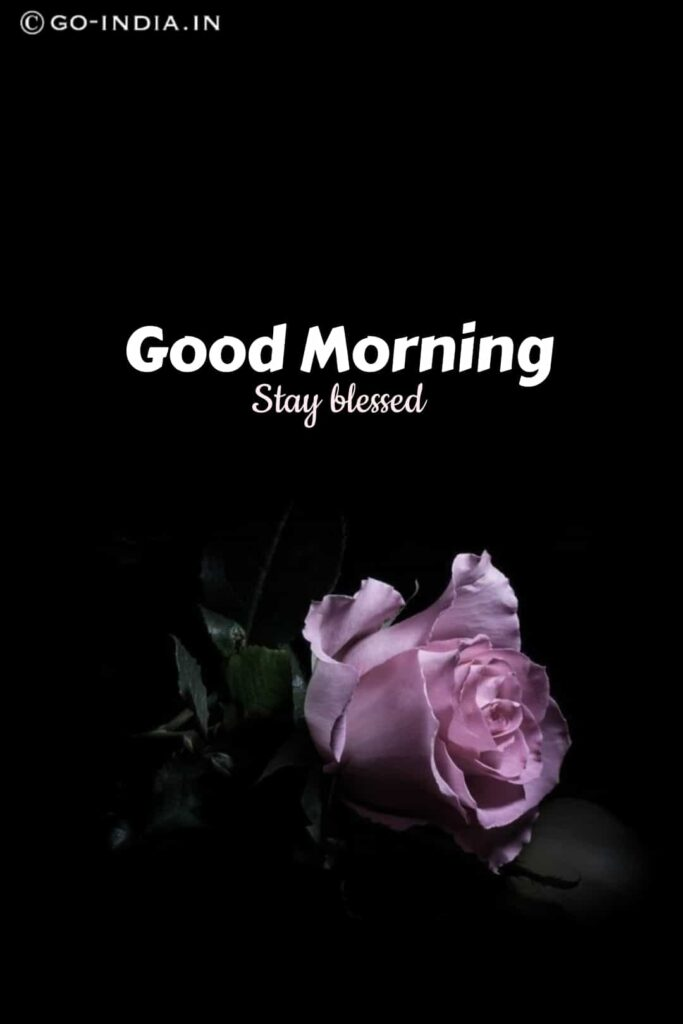 good morning stay blessed images with blue rose