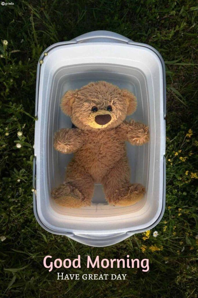good morning teddy bear photo