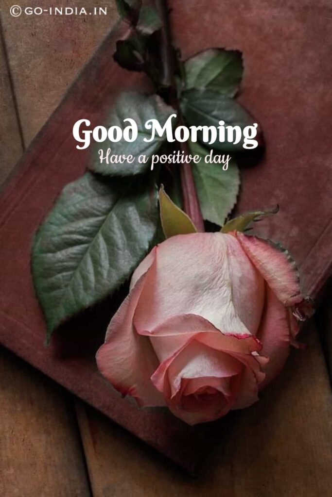 pink rose good morning romantic pictures