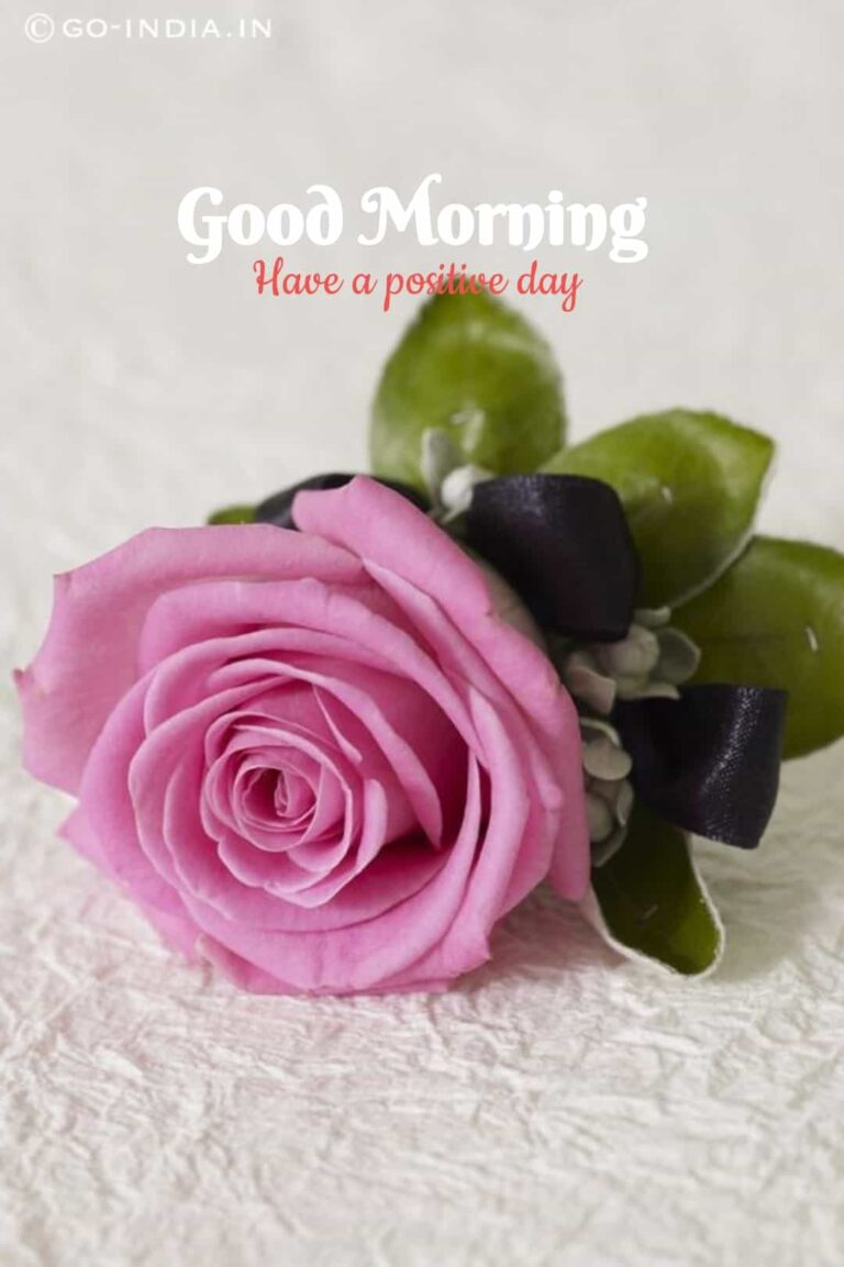 romantic good morning have a positive day wallpaper with pink rose