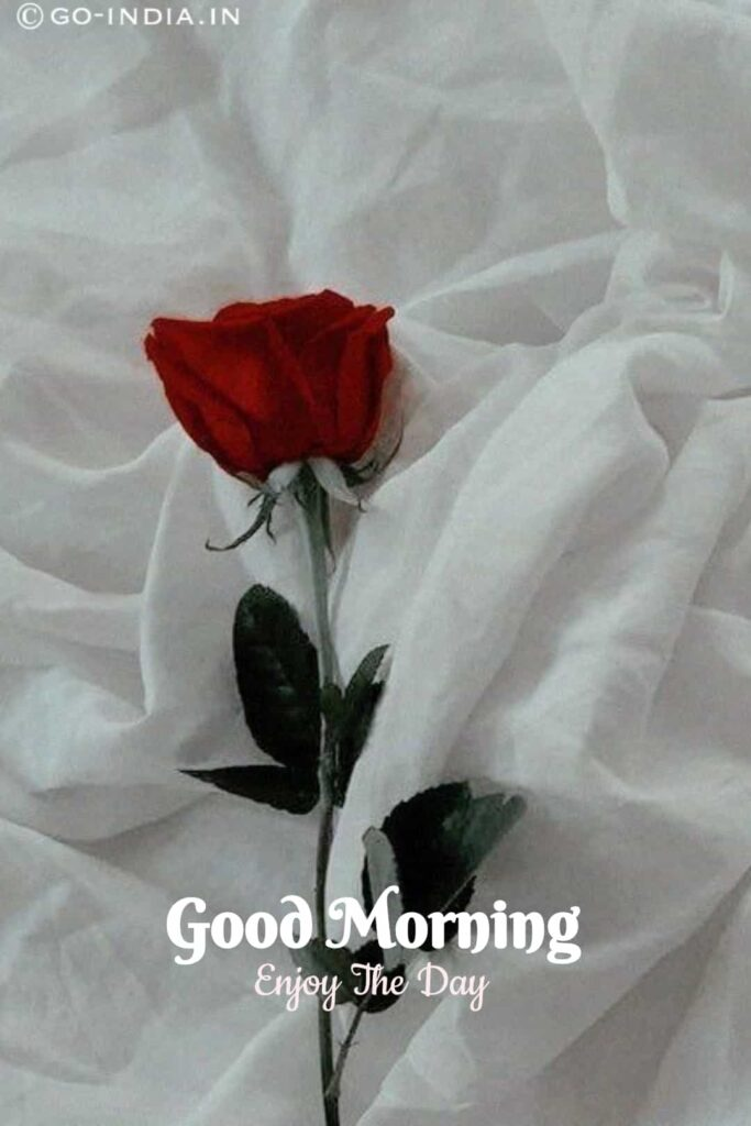 romantic good morning image with red rose