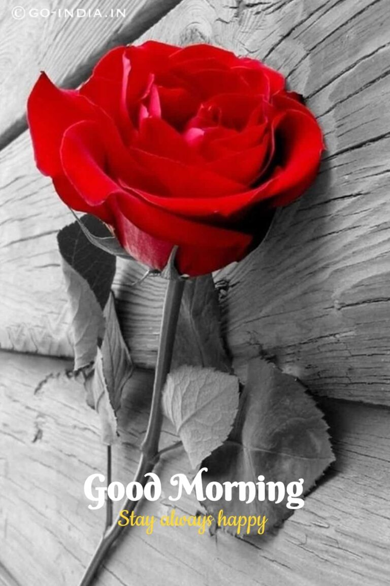 romantic good morning love image with red rose wallpaper