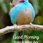 awesome birds good morning image