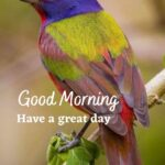 birds good morning hd wallpapers download