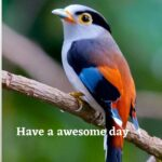 birds good morning images download
